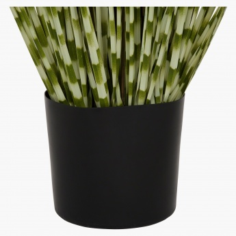 Zebra Grass in a Pot 183 cms