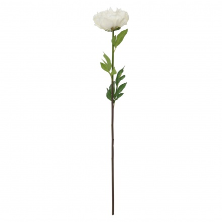 Peony Single Stem 79 cms