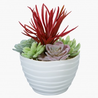 Decorative Succulent Plant in Pot