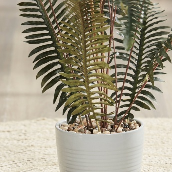 Fern Plant in Ceramic Pot - 70 cms