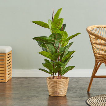 Rubber Tree on Plastic Pot - 98 cms