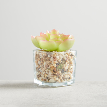 Petaluma Mini Succulent on Square Glass Pot - 8x8x9 cms